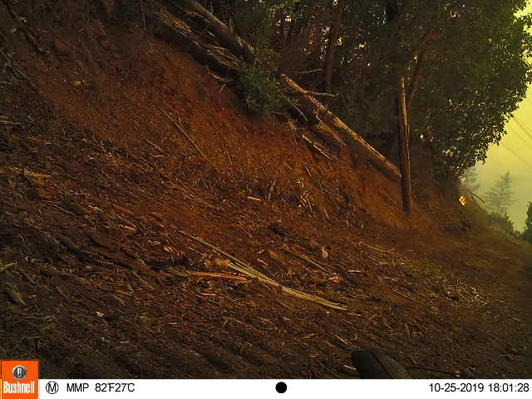 Less than an hour after fire vehicles moved through Red Hill, the first spot of fire is documented on the trail camera