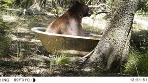 bear-bathtub-lesson.jpg